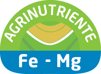 Fe – Mg